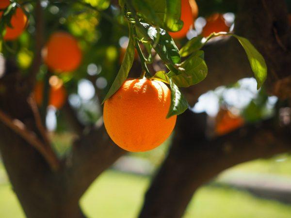 orange-orange