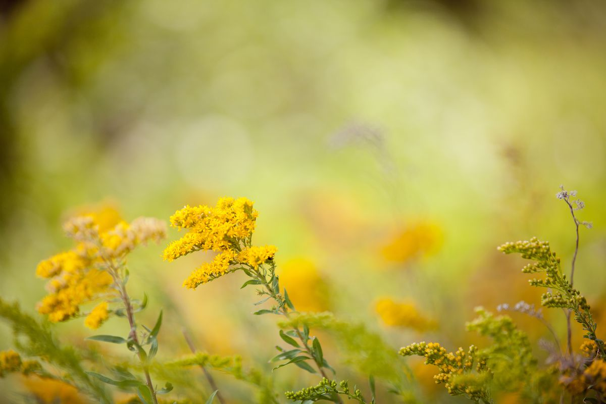spring-allergies-how-to-keep-them-away-from-home-2