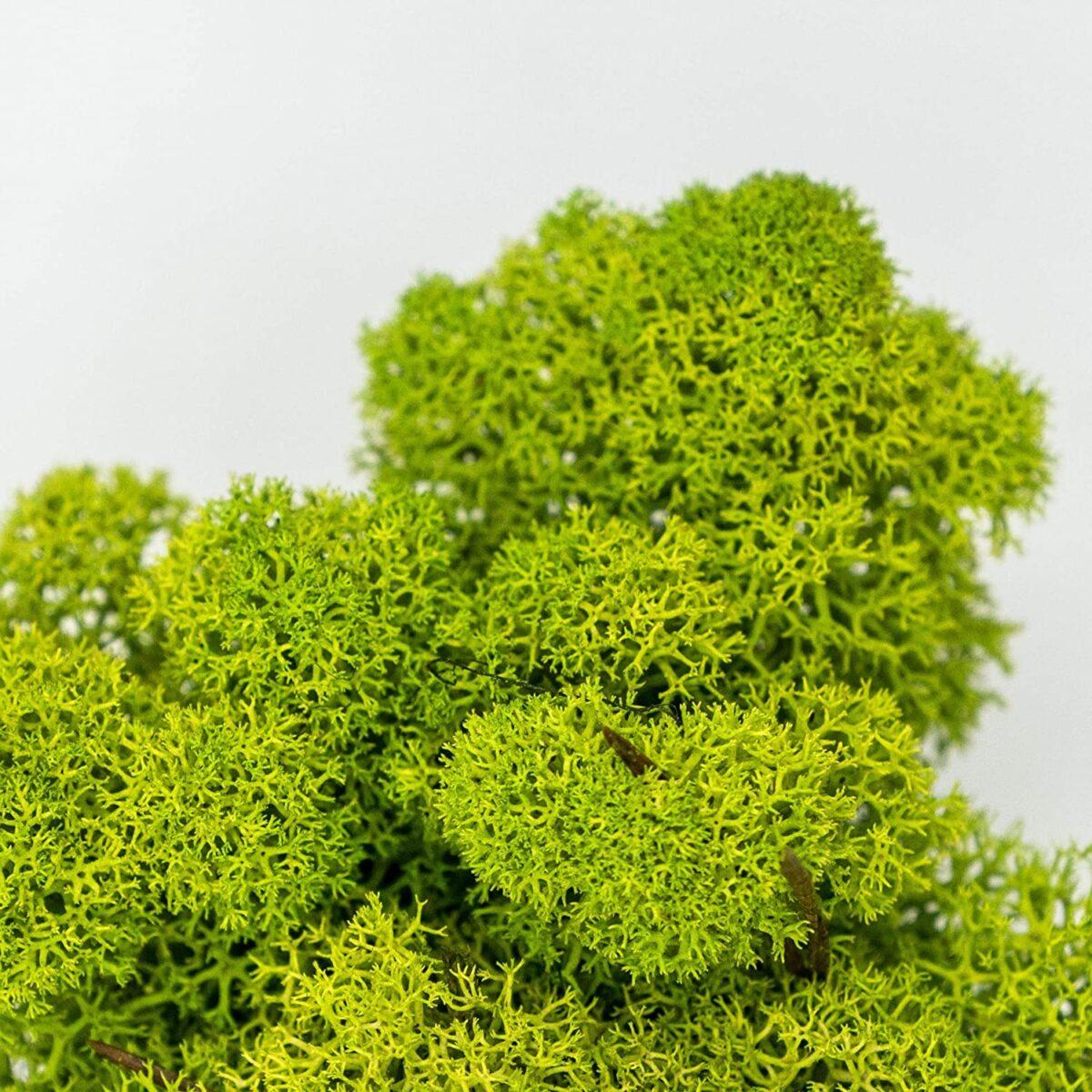 vegetable-frameworks 22
