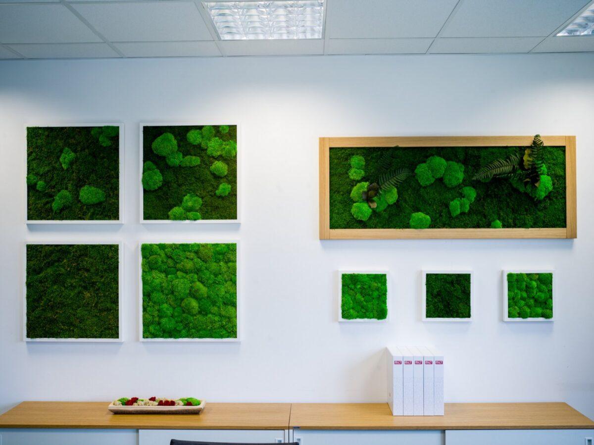 vegetable-frameworks 02